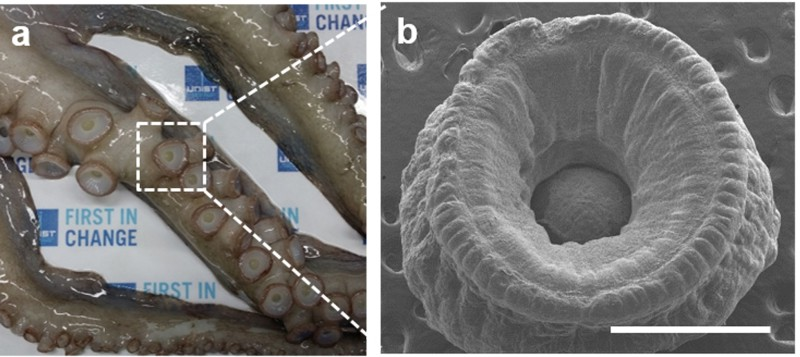 Flexible Pressure Sensors Similar to Suction Cups Mat Based on Octopus Suckers developed